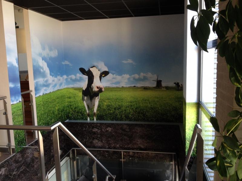 Hal / trap Kaaspack hoogeveen koeien foto wand